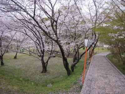 2008/04/07桜