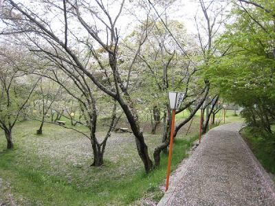 滝宮桜2008/04/14