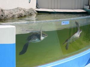 屋島水族館亀