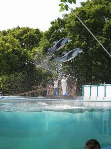 屋島水族館イルカ