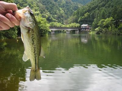 金砂湖小ワンドバス
