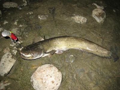 20080731鯰
