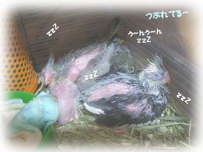 200501hinas.jpg