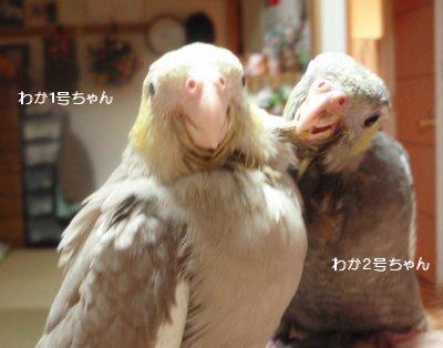 200522hina.jpg