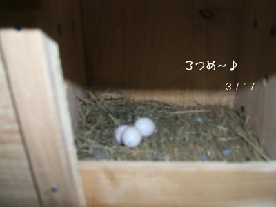 りるぽの卵ちゃん
