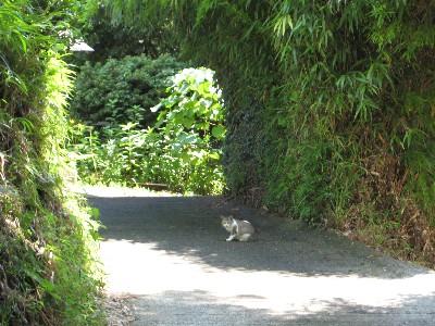 竹林と子猫ちゃん