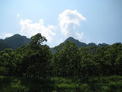 阿蘇の木々