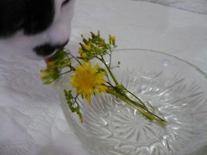 新鮮なお花は