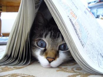 新聞 見せて