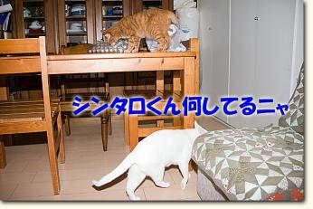 080508_01.jpg