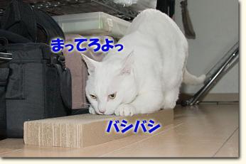080511_07.jpg