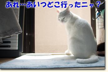 080530_05.jpg