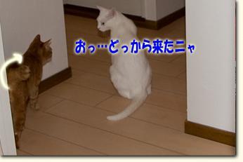 080531_04.jpg