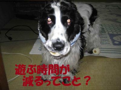 2008-1-10-11.jpg