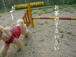 ぴょん 2
