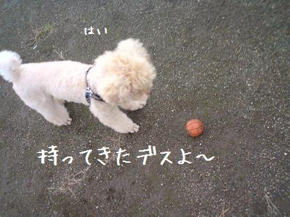 お散歩 3
