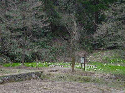 200804水芭蕉