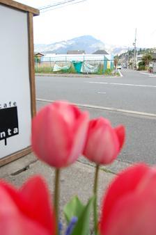 チューリップ比叡山