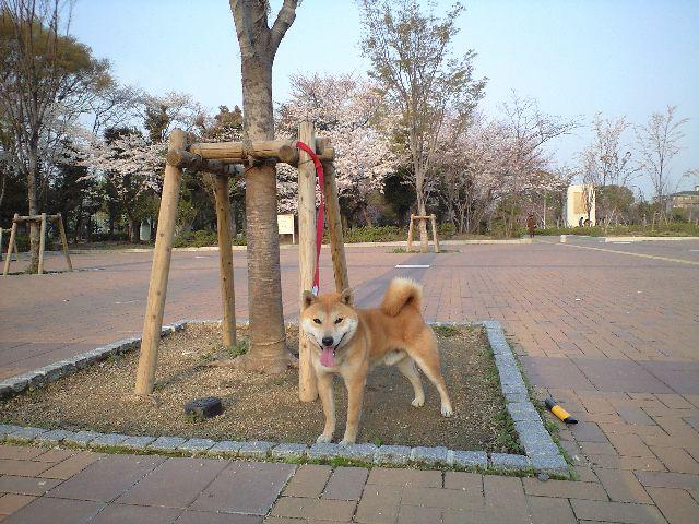 20080403ren2.jpg