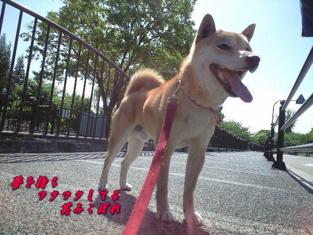 20080517ren1a.jpg