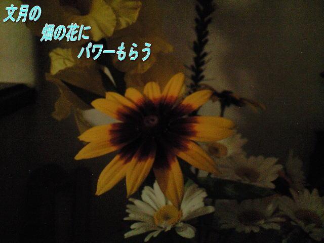 20080702hanaa.jpg