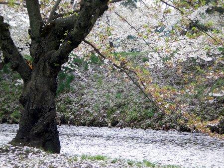 桜 亀甲門周辺