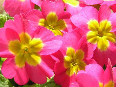春を感じて花盛り
