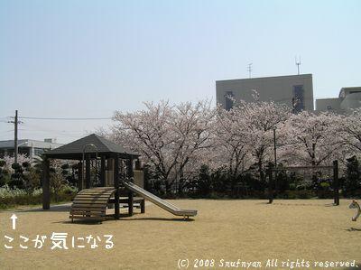 桜を見に行った時・・・・