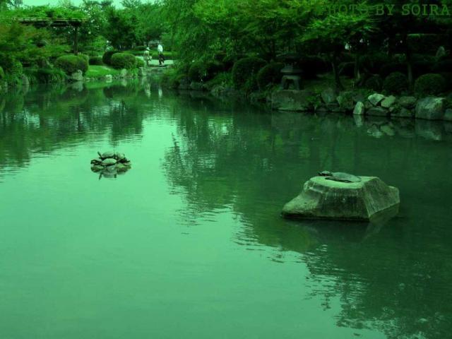 瓢箪池と亀