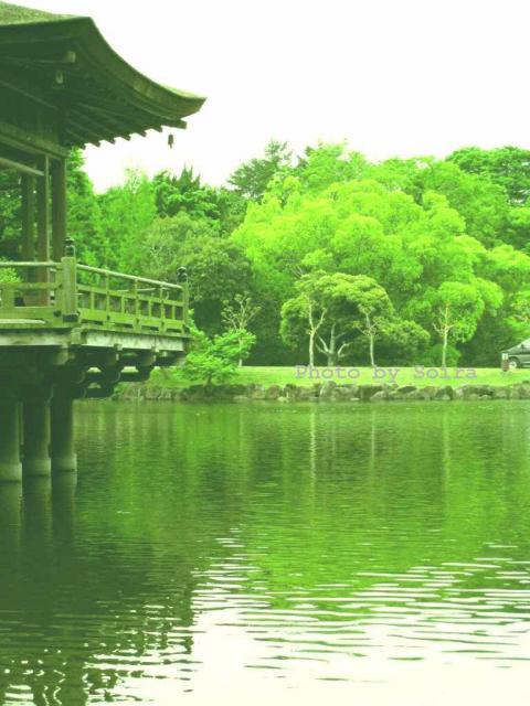 再び奈良公園 鷺池&浮見堂