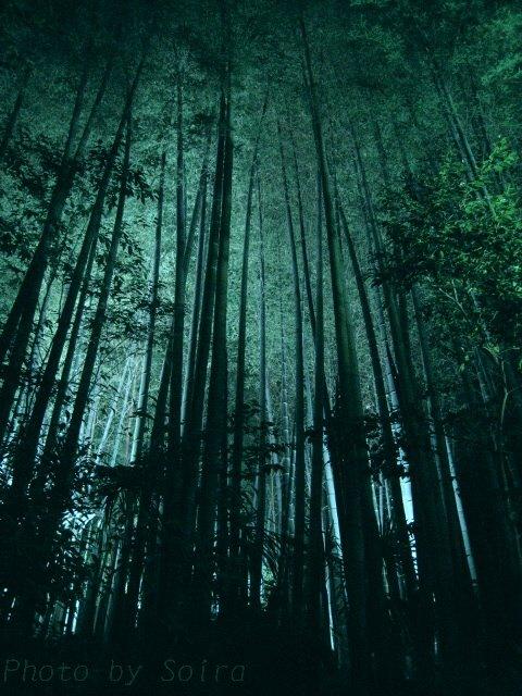 先ほど背後にあった竹林