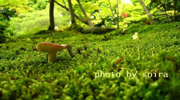 IMG_1172n.jpg