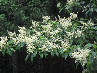 20080712花園神社奥の院 058