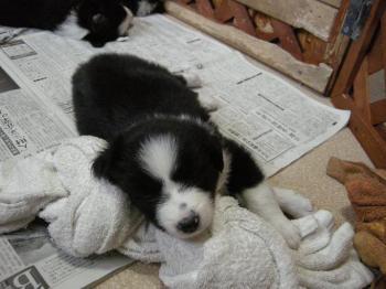 1番目の女の子~大きな枕です。