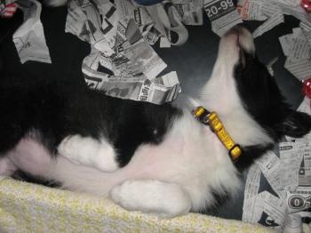 カレンちゃん・・お寝んね。
