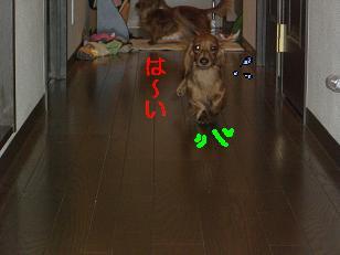 CIMG1852.jpg