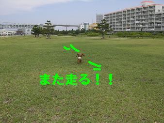 CIMG3224.jpg