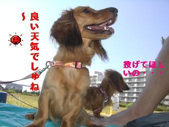 CIMG3368.jpg