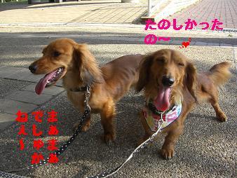 CIMG3396.jpg