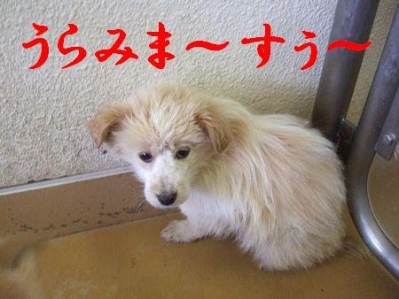 2008_0403_2.jpg
