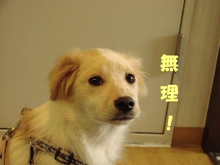 2008_0512_komugi_3.jpg