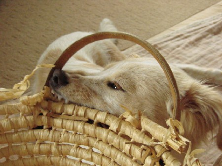 2008_0627_komugi_5.jpg