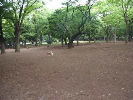 2008_0721_suzu_1.jpg