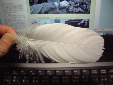 かじり羽1