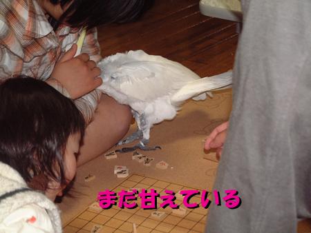はさみ将棋2