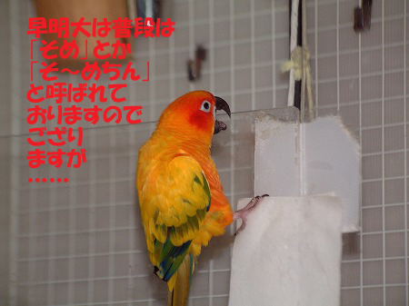 s-2008-07-22-025.jpg