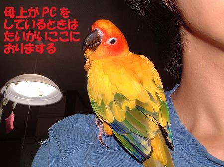 s-2008-07-22-033.jpg