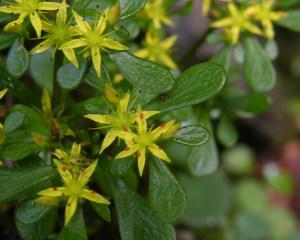 三段峡の花
