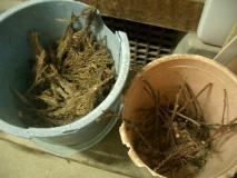 焚きつけの杉の葉っぱと小枝