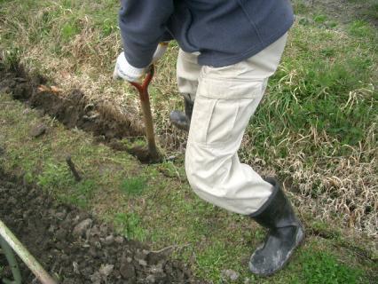 スコップで溝を掘っていきます
